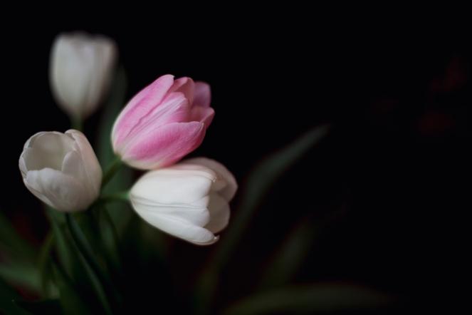FineArt_Tulips001
