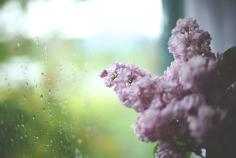 Lilac002